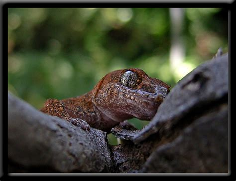 Reptiles in Western Australia - information and great