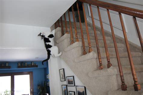 Story: Cat Climbs Stairs : Life with Dogs and Cats